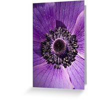 Purple Poppy Greeting Card