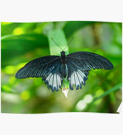 Butterfly Macro 6 Poster