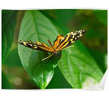 Butterfly Macro 7 Poster