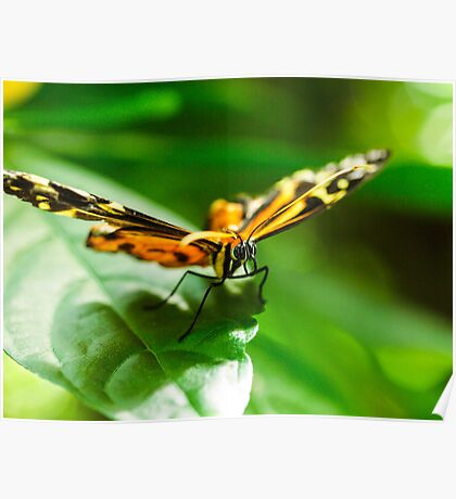 Butterfly Macro 12 Poster