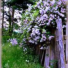 Dame's Rocket with Lilacs over Lemurian Fence by TrendleEllwood