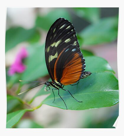 Butterfly Macro 10 Poster