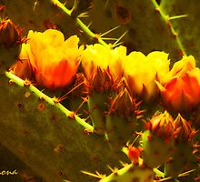 Fiery Cacti Blooms by Winona Sharp
