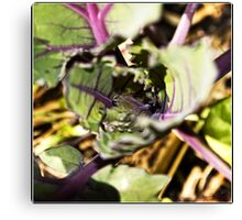 Red Cabbage Macro Canvas Print