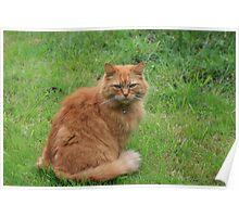 Mr Ginger Poster