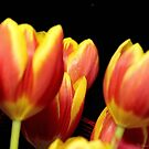 Tulip Bunch by TeAnne