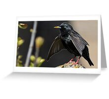 Drying Out Greeting Card