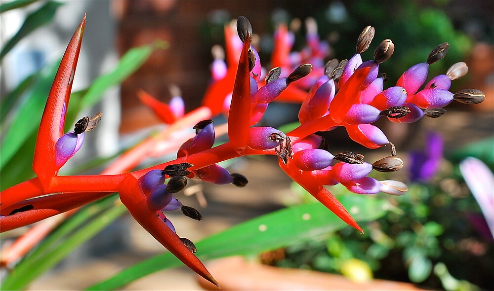 Beautiful Bromeliad # 2 by Penny Smith