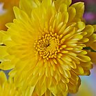 Mother&#x27;s Day Chrysanthemum by Penny Smith