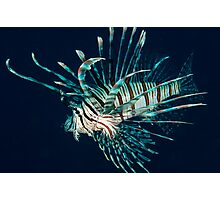 A Lion of a Fish Photographic Print