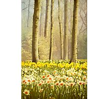 A Spring Day Photographic Print