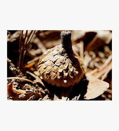 Acorn Cap Photographic Print
