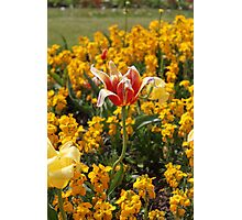 Victoria Park Flowers Photographic Print
