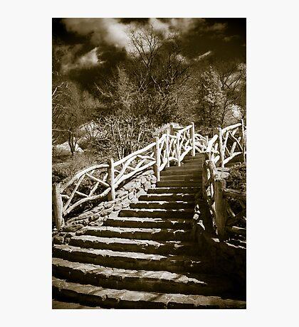 Shakespeare Garden - Central Park Photographic Print