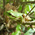 Common tree frog by TheWanderer27