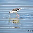 Black-winged stilt by TheWanderer27