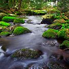 Deep Forrest Stream by Nazareth
