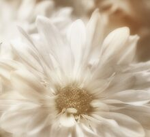 shine flower image by Kelly Letky