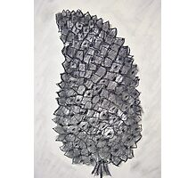 Pine Cone in Charcoal Photographic Print