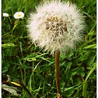 Dandelion by buswankerbeth
