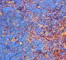 Tree leaves & blue sky - abstract by ZoeKay