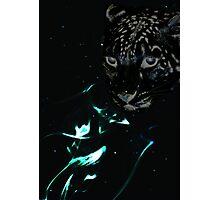 Leopard of Little Breezes Photographic Print