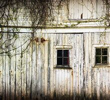 Rural Windows by Amanda White