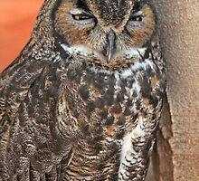 Sleepy Owl  by Atman Victor