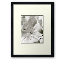 Flower in Black and White 2 Framed Print