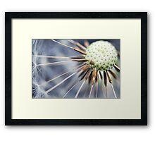 Dandelion fluff... 3 Framed Print