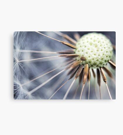 Dandelion fluff... 3 Canvas Print