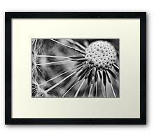 Dandelion fluff... 3 (BW) Framed Print