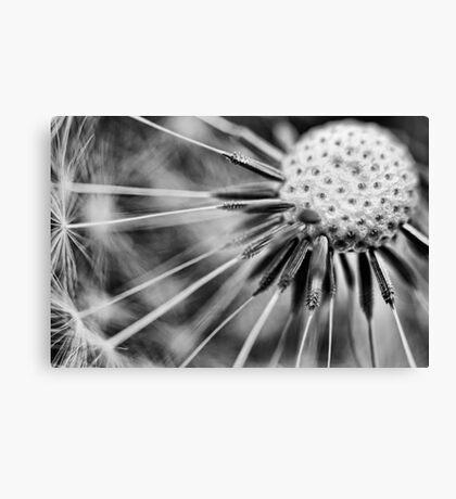 Dandelion fluff... 3 (BW) Canvas Print