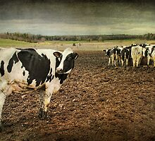 Standing Out from the Crowd...Or Herd by Amanda White