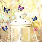 Lantern  by Laura  Cutts