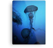 Portrait of a Jellyfish- Blue Metal Print