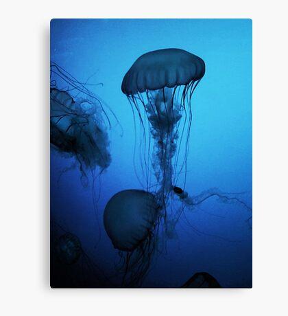 Portrait of a Jellyfish- Blue Canvas Print