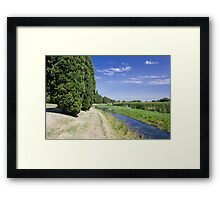 The Cypresses Framed Print