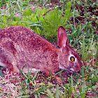 Cute as a bunny by ♥⊱ B. Randi Bailey