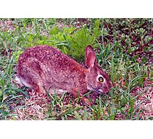 Cute as a bunny Photographic Print