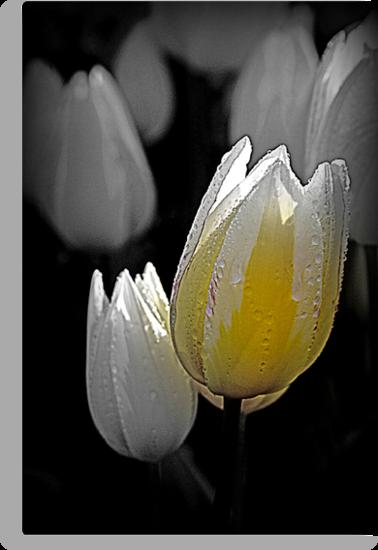 Mellow Yellow by Beverley Barrett