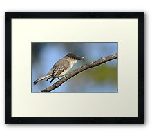Meal of the day! Framed Print