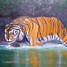 Tiger Fishing by towncrier