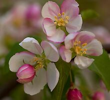 Blossoms by Eunice Gibb