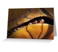 Eastern Box Turtle (three-toed Box Turtle) Greeting Card