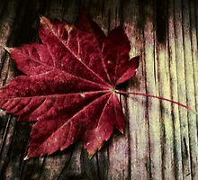 Red Leaf On A Bench by Diane Schuster