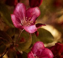 potential - velvety crababble blossoms by Kelly Letky