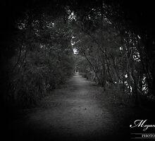 Darkness falls by Megan Shapcott