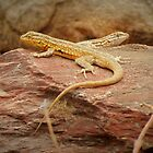 Common Side-blotched Lizard (Pair) by Kimberly P-Chadwick