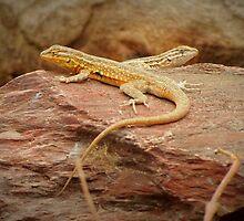 Common Side-blotched Lizard (Pair) by Kimberly Chadwick